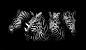 The-Art-of-Interior-Zebra